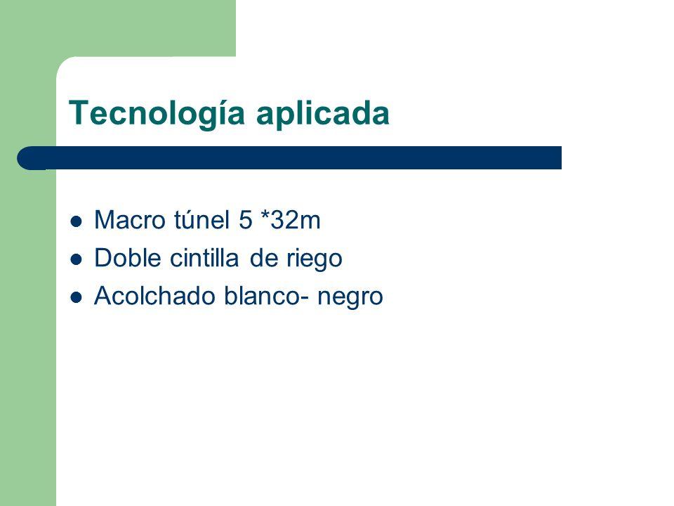Tecnología aplicada Macro túnel 5 *32m Doble cintilla de riego Acolchado blanco- negro