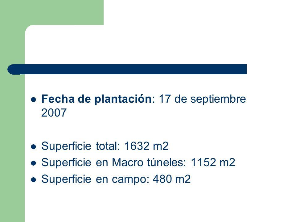 Fecha de plantación: 17 de septiembre 2007 Superficie total: 1632 m2 Superficie en Macro túneles: 1152 m2 Superficie en campo: 480 m2