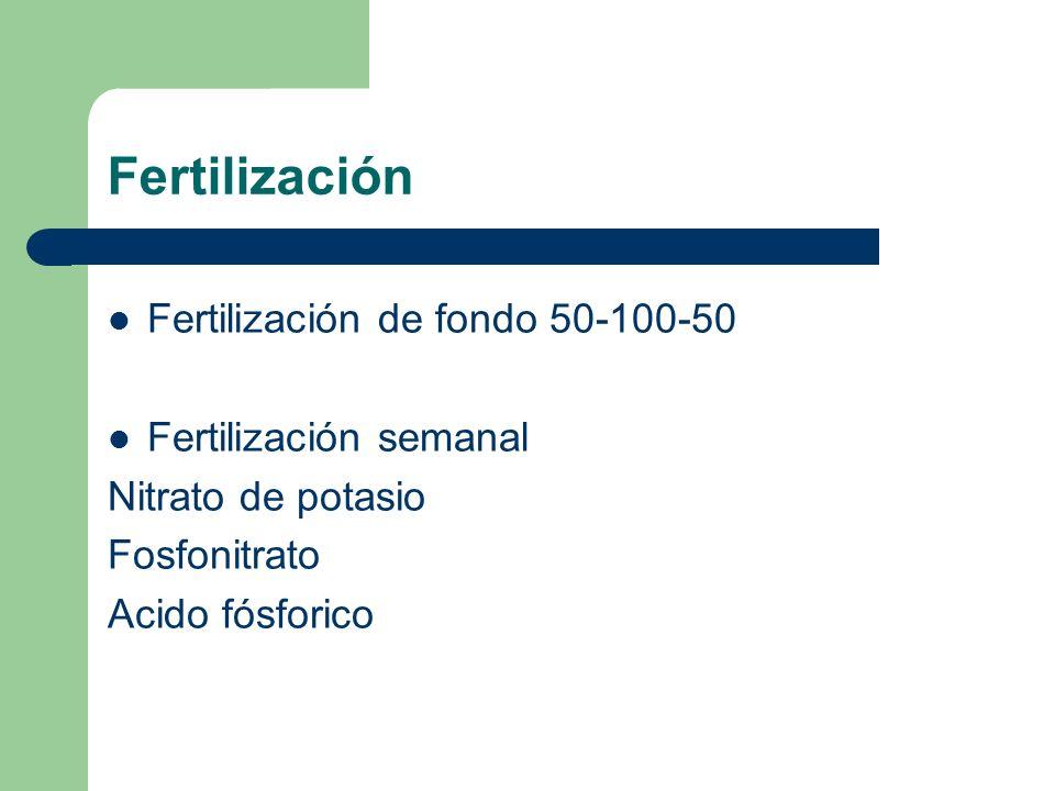 Fertilización Fertilización de fondo 50-100-50 Fertilización semanal Nitrato de potasio Fosfonitrato Acido fósforico