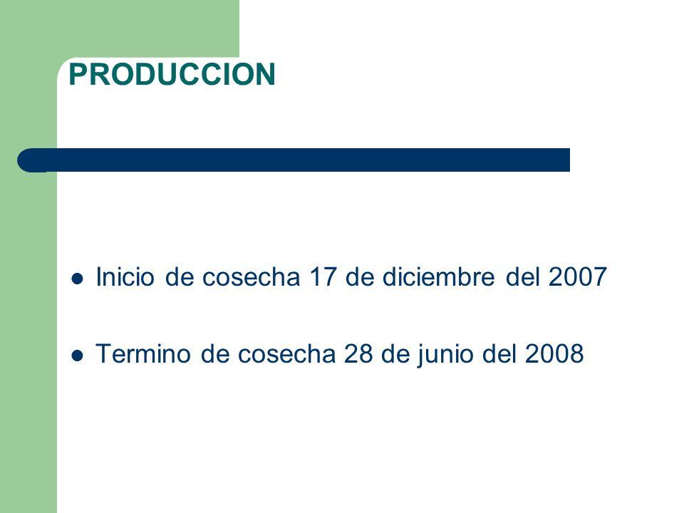 PRODUCCION Inicio de cosecha 17 de diciembre del 2007 Termino de cosecha 28 de junio del 2008