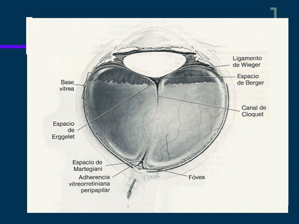 Definición Son aquellos que comprometen 90° o mas de la circunferencia retiniana.