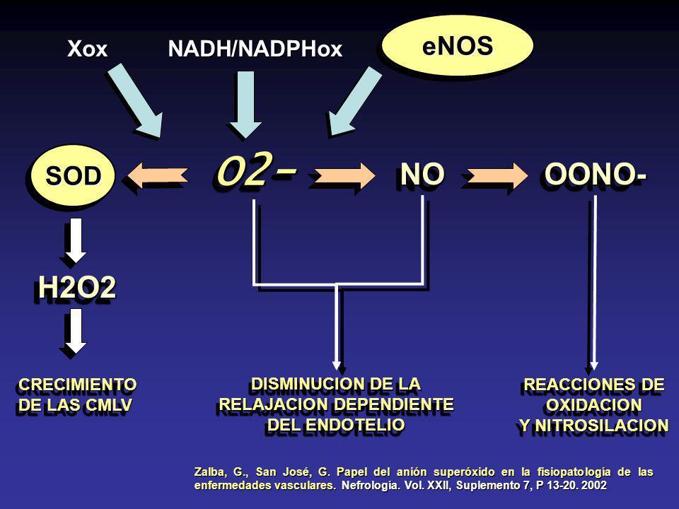 eNOSeNOS NADH/NADPHoxXox O2-O2- NONOOONO-OONO- SODSOD H2O2H2O2 CRECIMIENTO DE LAS CMLV CRECIMIENTO DISMINUCION DE LA RELAJACION DEPENDIENTE DEL ENDOTELIO DISMINUCION DE LA RELAJACION DEPENDIENTE DEL ENDOTELIO REACCIONES DE OXIDACION Y NITROSILACION REACCIONES DE OXIDACION Y NITROSILACION Zalba, G., San José, G.