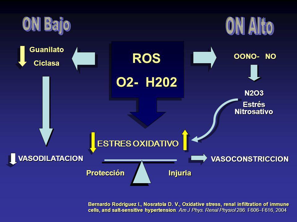 DEFENSAS CONTRA EL ESTRÉS OXIDATIVO 1.Nucleótidos de Piridina 2.Lactato / Piruvato 3.Cisteína 4.Sistema de Glutamato 1.Nucleótidos de Piridina 2.Lacta