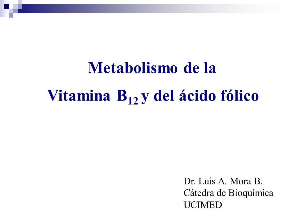 Metabolismo de la Vitamina B 12 y del ácido fólico Dr. Luis A. Mora B. Cátedra de Bioquímica UCIMED