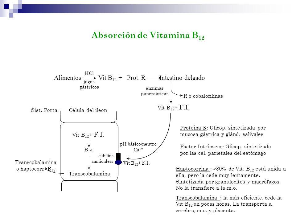 Alimentos Vit B 12 + Prot. R Intestino delgado HCl jugos gástricos Vit B 12 + F.I. R o cobalofilinas Célula del ileon pH básico/neutro Ca +2 Vit B 12