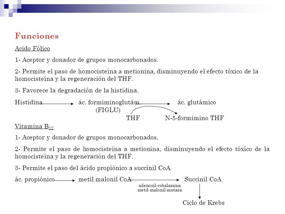 Funciones Acido Fólico 1- Aceptor y donador de grupos monocarbonados. 2- Permite el paso de homocisteína a metionina, disminuyendo el efecto tóxico de