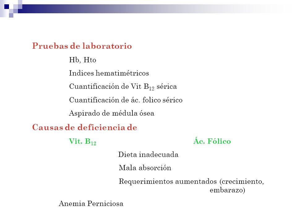Pruebas de laboratorio Hb, Hto Indices hematimétricos Cuantificación de Vit B 12 sérica Cuantificación de ác. folico sérico Aspirado de médula ósea Ca