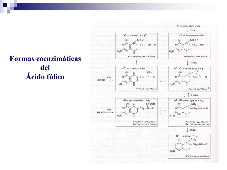 Formas coenzimáticas del Ácido fólico