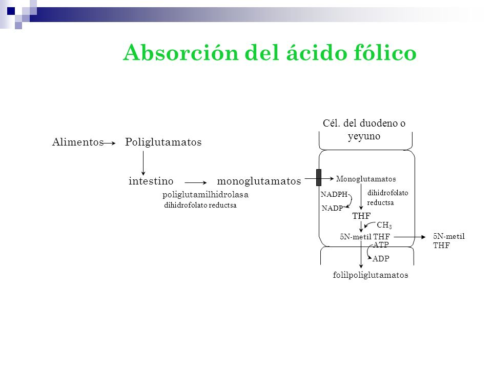 Alimentos Poliglutamatos intestinomonoglutamatos poliglutamilhidrolasa dihidrofolato reductsa Cél. del duodeno o yeyuno Monoglutamatos THF dihidrofola