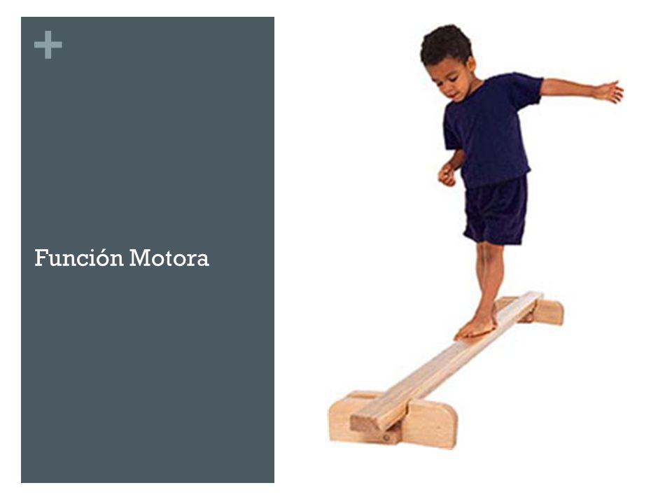 + Exploración Sistema Motor Vía Piramidal Motoneurona superior Corteza Motora Cilindroejes Vía Terminal Común Motoneuronas del asta anterior Unidades Motoras Alteraciones Síndrome Piramidal Síndrome de segunda neurona