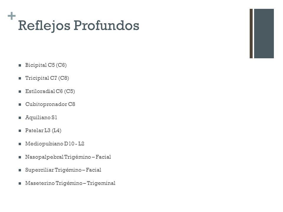 + Reflejos Profundos Bicipital C5 (C6) Tricipital C7 (C8) Estiloradial C6 (C5) Cubitopronador C8 Aquiliano S1 Patelar L3 (L4) Mediopubiano D10 - L2 Na