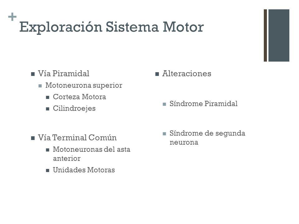 + Exploración Sistema Motor Vía Piramidal Motoneurona superior Corteza Motora Cilindroejes Vía Terminal Común Motoneuronas del asta anterior Unidades