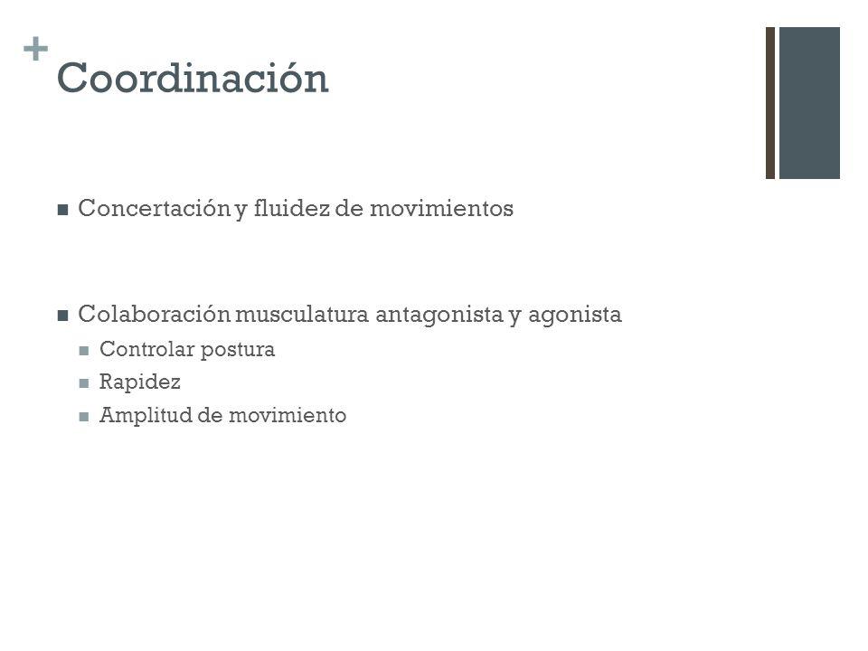 + Coordinación Concertación y fluidez de movimientos Colaboración musculatura antagonista y agonista Controlar postura Rapidez Amplitud de movimiento