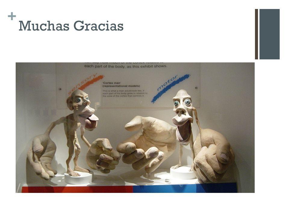+ Muchas Gracias