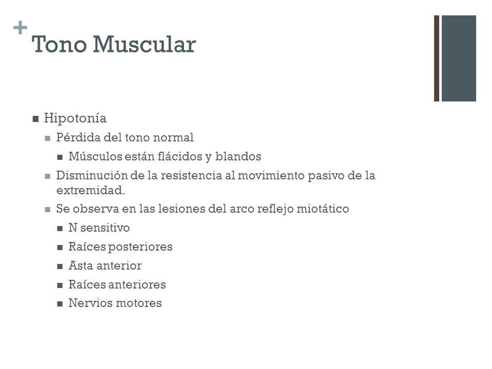 + Tono Muscular Hipotonía Pérdida del tono normal Músculos están flácidos y blandos Disminución de la resistencia al movimiento pasivo de la extremida