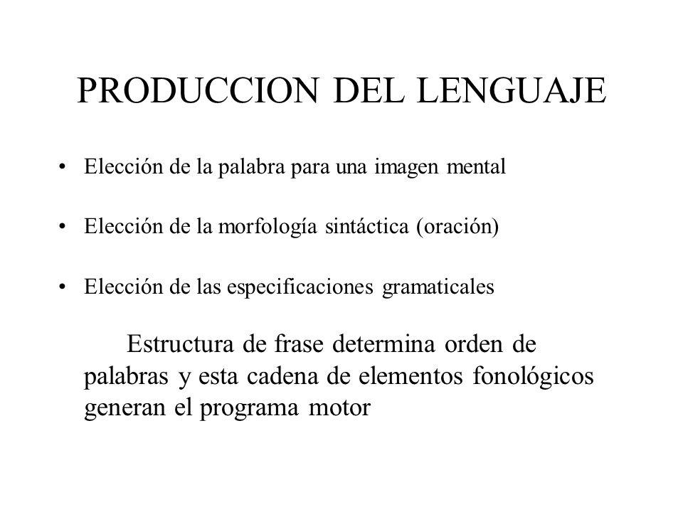 PRODUCCION DEL LENGUAJE Elección de la palabra para una imagen mental Elección de la morfología sintáctica (oración) Elección de las especificaciones
