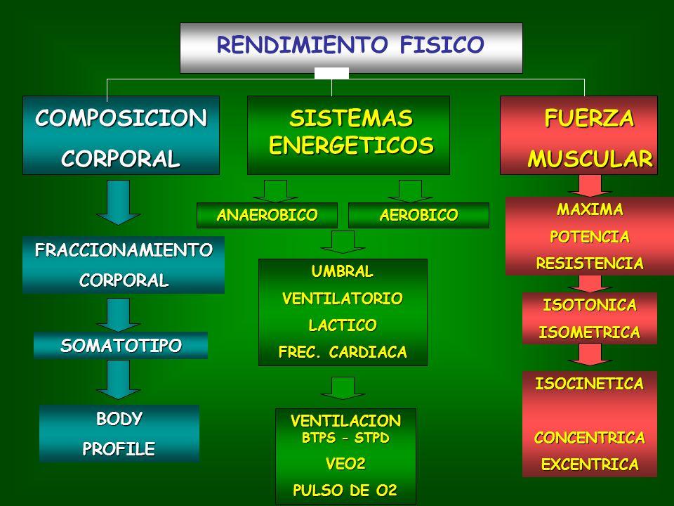 RENDIMIENTO FISICO FUERZAMUSCULAR SISTEMAS ENERGETICOS COMPOSICIONCORPORAL ANAEROBICO ISOCINETICACONCENTRICAEXCENTRICA ISOTONICAISOMETRICA MAXIMAPOTENCIARESISTENCIA BODYPROFILE SOMATOTIPO FRACCIONAMIENTOCORPORAL AEROBICO UMBRALVENTILATORIOLACTICO FREC.