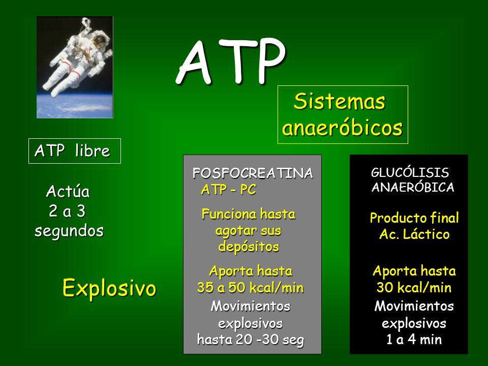 ATP ATP libre Sistemasanaeróbicos Actúa 2 a 3 segundos segundos Aporta hasta 35 a 50 kcal/min Movimientosexplosivos hasta 20 -30 seg Aporta hasta 30 kcal/min Movimientosexplosivos 1 a 4 min FOSFOCREATINA ATP - PC ATP - PCGLUCÓLISISANAERÓBICA Funciona hasta agotar sus depósitos Producto final Ac.