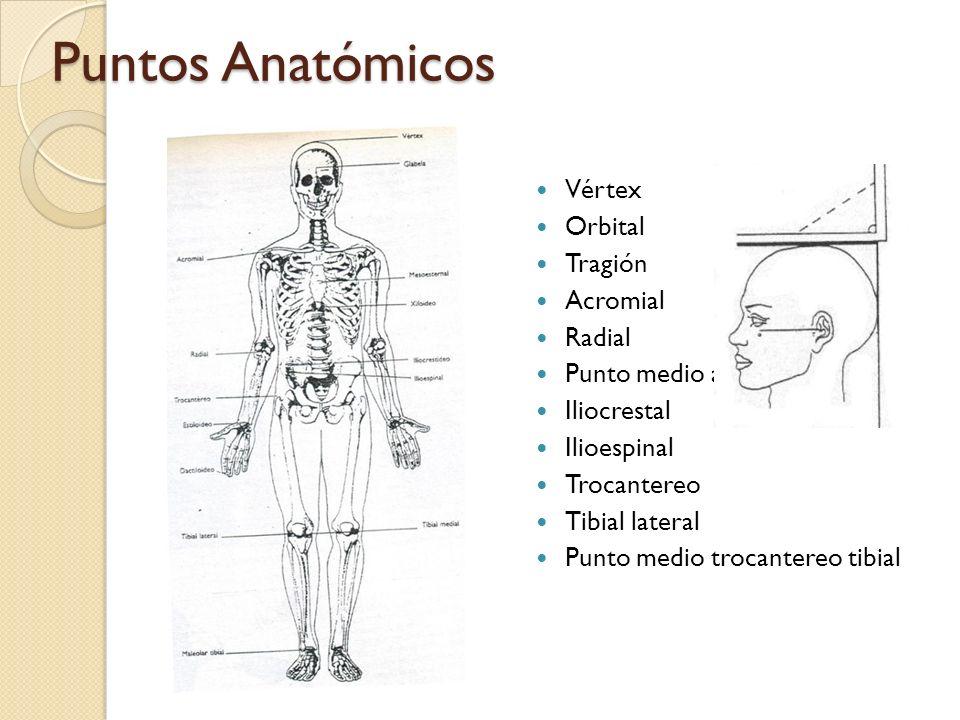 Puntos Anatómicos Vértex Orbital Tragión Acromial Radial Punto medio acromio radial Iliocrestal Ilioespinal Trocantereo Tibial lateral Punto medio trocantereo tibial
