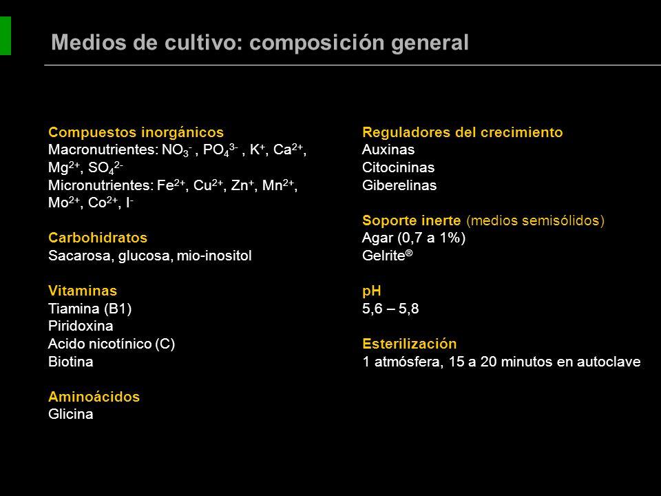 Soluciones concentradas de macroelementos (100x) Soluciones concentradas de microelementos (100x) Vitaminas grupo B (500 ó 1000x) Mio-inositol (100 mg/L) Azúcares: Generalmente sacarosa o glucosa en concentraciones de aproximadamente 30 g/L.