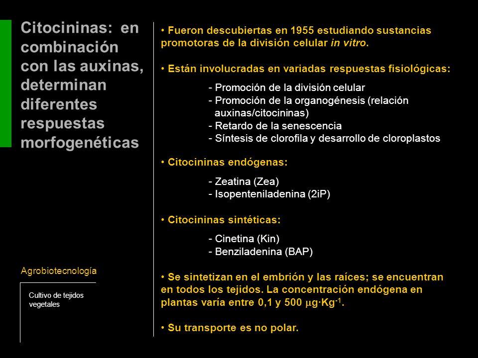 Estructura química de las principales citocininas