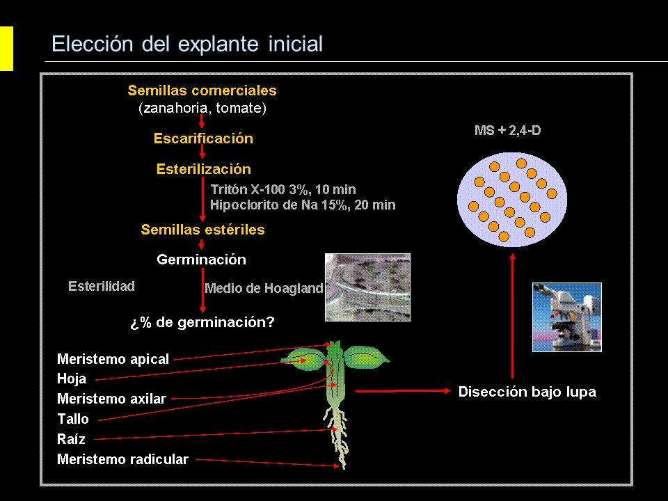 Protocolo tipo de esterilización superficial de material vegetal: - Etanol 70%, entre 5 y 10 segundos.