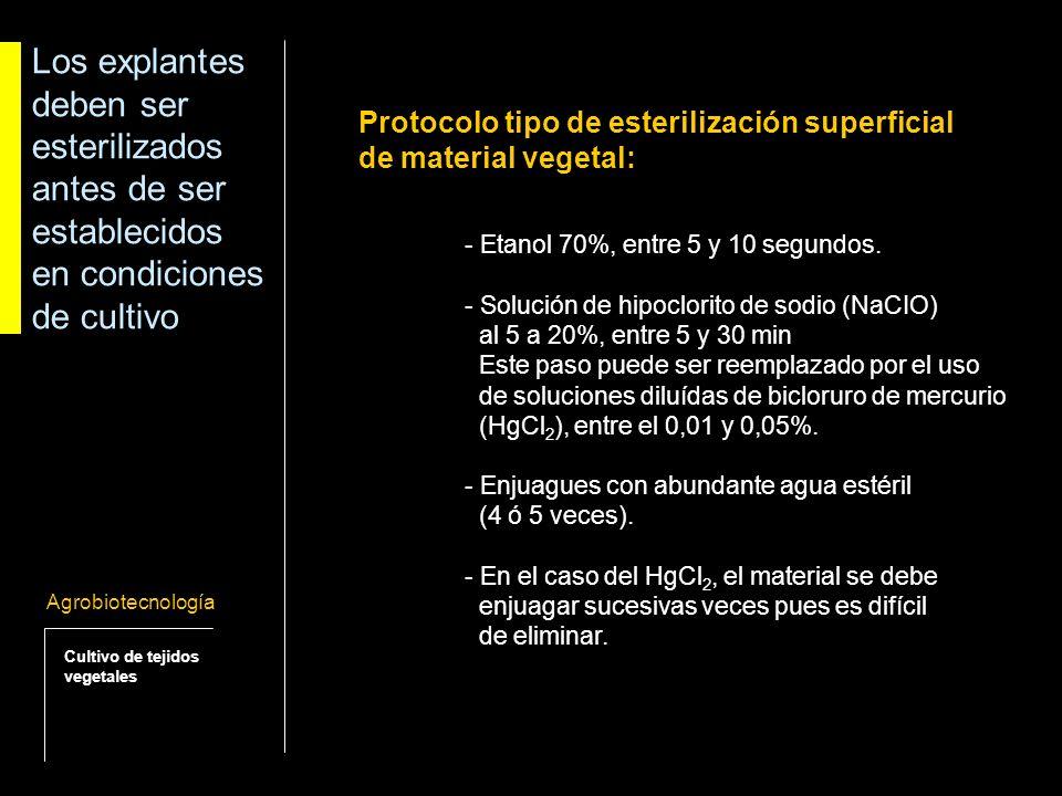 Posibles respuestas de los cultivos vegetales in vitro