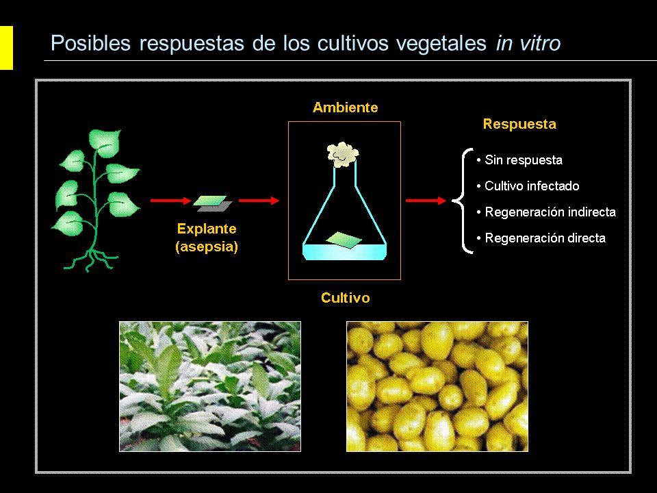 Vías morfogenéticas: organogénesis y embriogénesis Agrobiotecnología Cultivo de tejidos vegetales