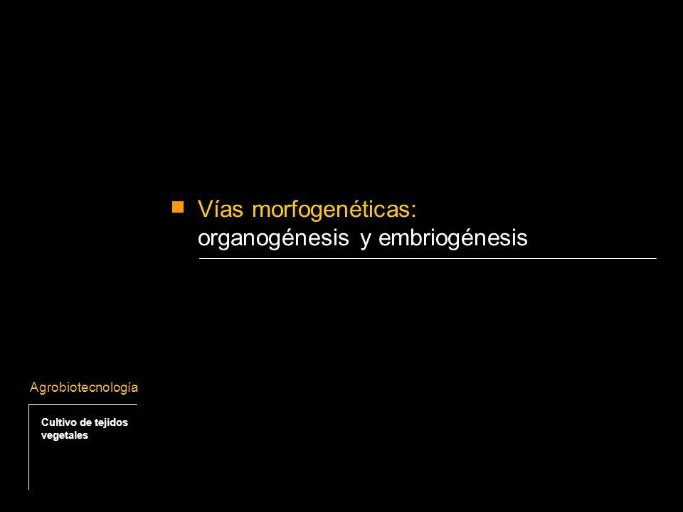 Propagación vegetativa por embriogénesis somática