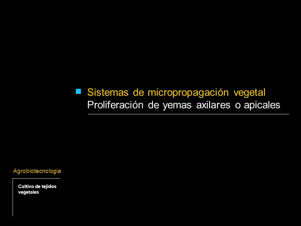 Proliferación de yemas apicales o axilares - Consiste en la multiplicación de plantas a partir de las yemas axilares preexistentes.