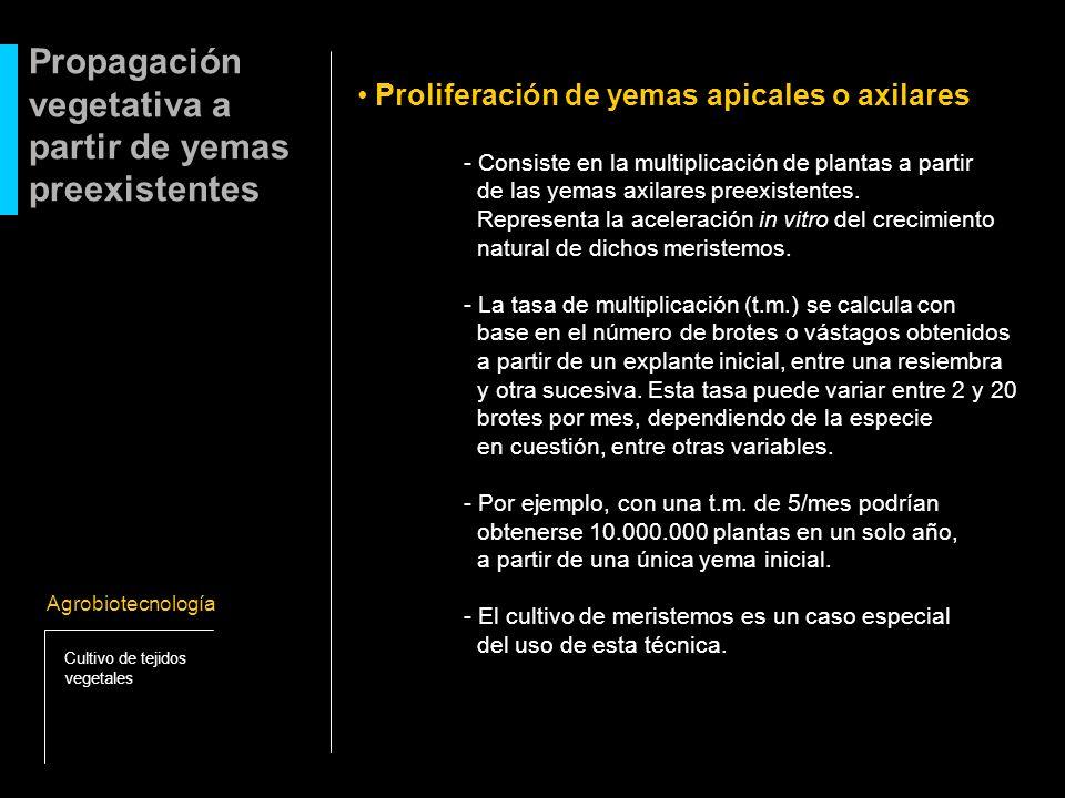 Proliferación de yemas apicales o axilares - Consiste en la multiplicación de plantas a partir de las yemas axilares preexistentes. Representa la acel