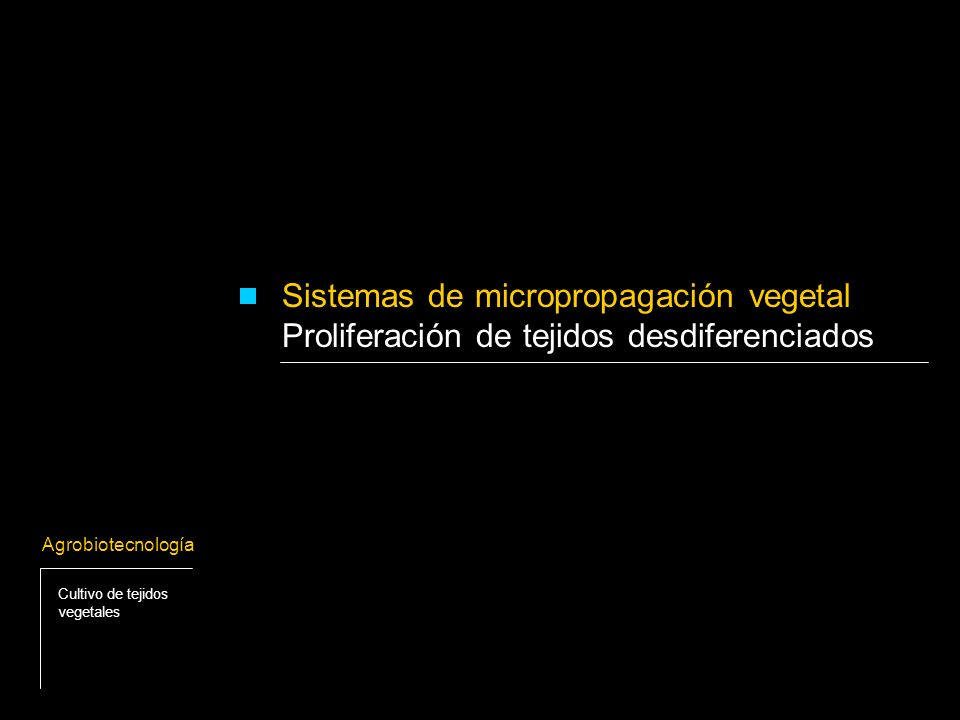 Consideraciones generales: - Callo: masa de células desdiferenciadas obtenidas a partir de un explante cultivado in vitro (disco de hoja, meristemo, células en suspensión, etc.) - Es posible regenerar brotes o vástagos a partir de estos callos.