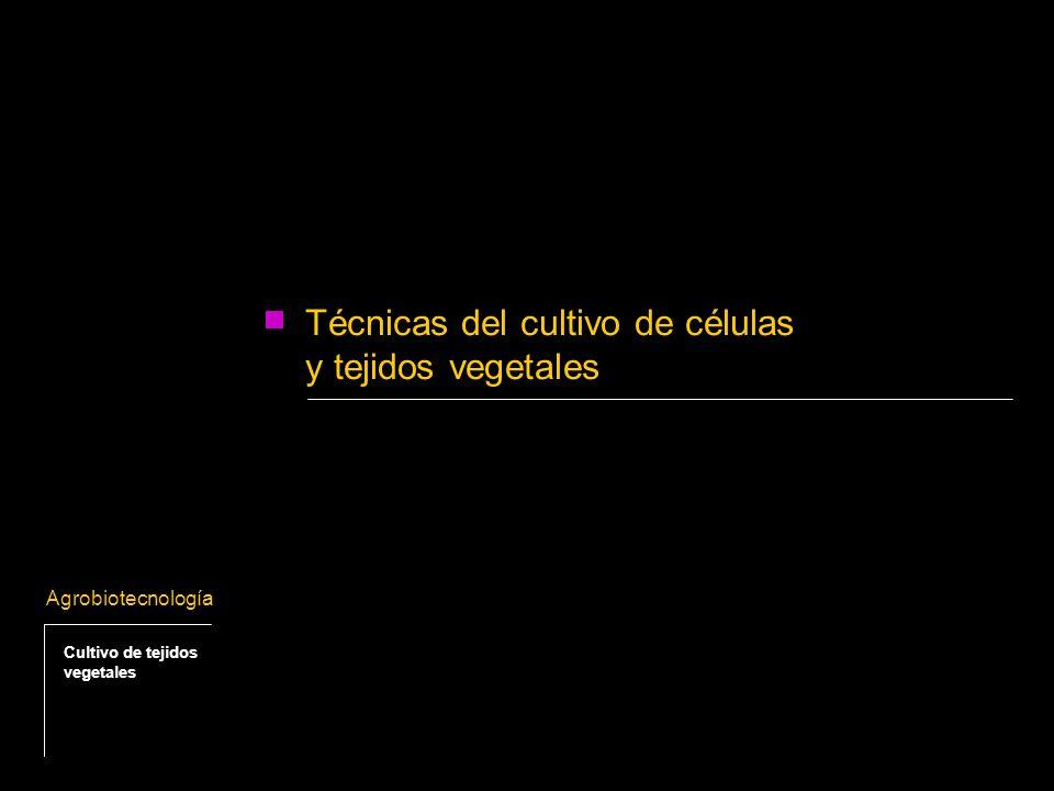 Existen tres conceptos básicos que fundamentan el cultivo in vitro de células y tejidos vegetales: - Totipotencialidad celular - Desdiferenciación / Rediferenciación - Balance de reguladores del crecimiento vegetal Principales conceptos fisiológicos aplicables a los cultivos in vitro Agrobiotecnología Cultivo de tejidos vegetales