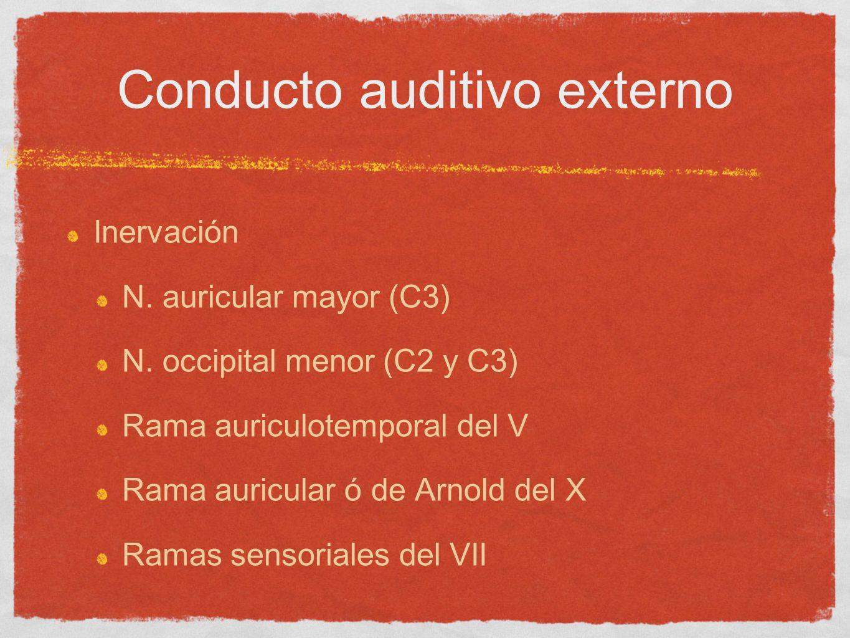 Conducto auditivo externo Inervación N. auricular mayor (C3) N. occipital menor (C2 y C3) Rama auriculotemporal del V Rama auricular ó de Arnold del X