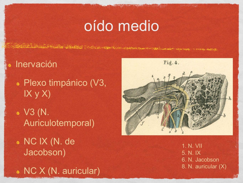 oído medio Inervación Plexo timpánico (V3, IX y X) V3 (N. Auriculotemporal) NC IX (N. de Jacobson) NC X (N. auricular) 1. N. VII 5. N. IX 6. N. Jacobs