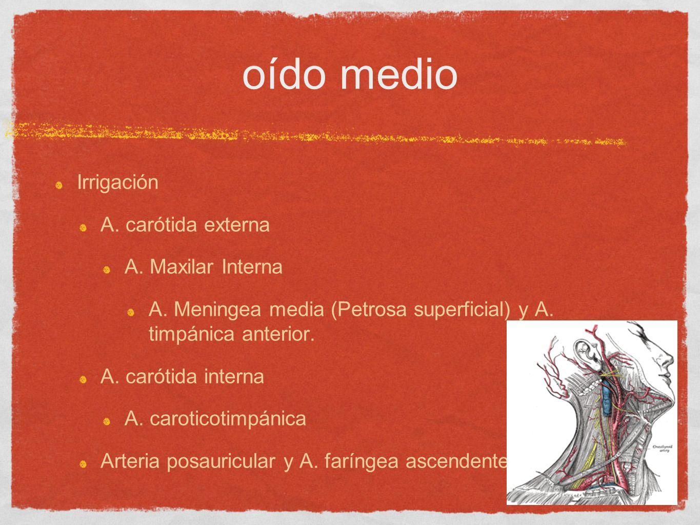 oído medio Irrigación A. carótida externa A. Maxilar Interna A. Meningea media (Petrosa superficial) y A. timpánica anterior. A. carótida interna A. c