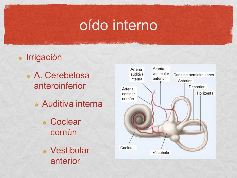 Irrigación A. Cerebelosa anteroinferior Auditiva interna Coclear común Vestibular anterior