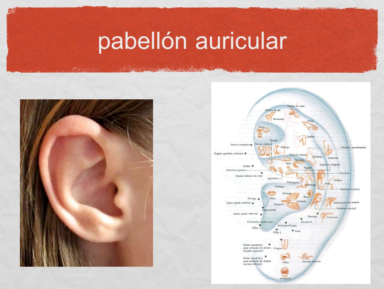 pabellón auricular