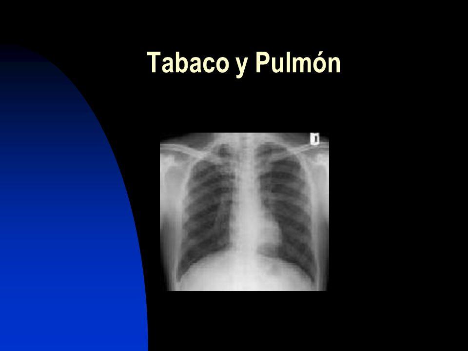 Pulmón Boca Faringe Laringe Esófago Vejiga urinaria Páncreas Riñón Leucemias Casos familiares de c. mama Tumores asociados