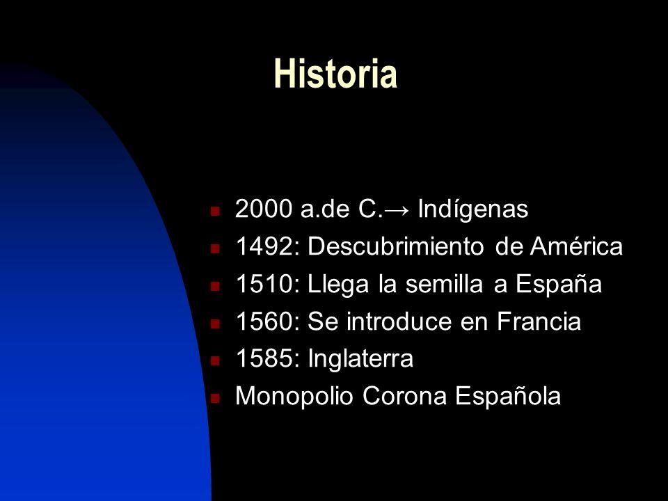 Origen en América (Mayas) CIKAR= Fumar en maya TABAGO= Caña en forma de pipa Jean NICOT= Diplomático francés Historia