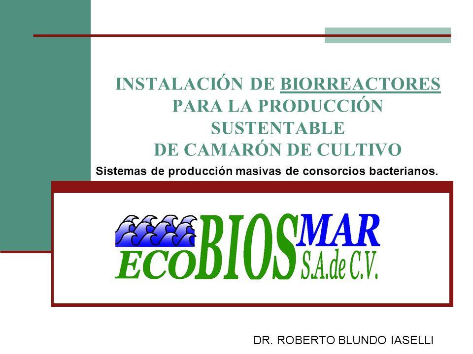 INSTALACIÓN DE BIORREACTORES PARA LA PRODUCCIÓN SUSTENTABLE DE CAMARÓN DE CULTIVO Sistemas de producción masivas de consorcios bacterianos. DR. ROBERT
