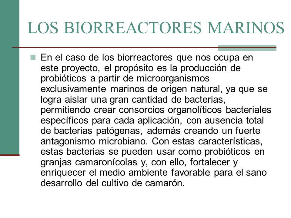 LOS BIORREACTORES MARINOS En el caso de los biorreactores que nos ocupa en este proyecto, el propósito es la producción de probióticos a partir de mic