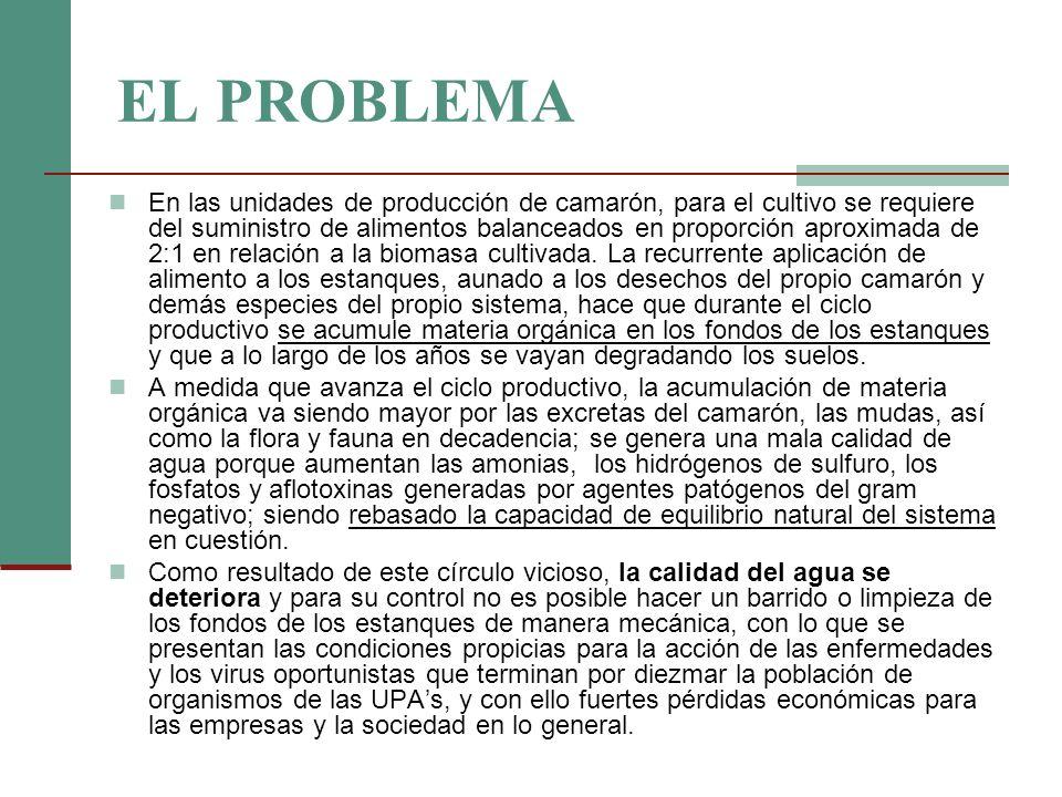 EL PROBLEMA En las unidades de producción de camarón, para el cultivo se requiere del suministro de alimentos balanceados en proporción aproximada de