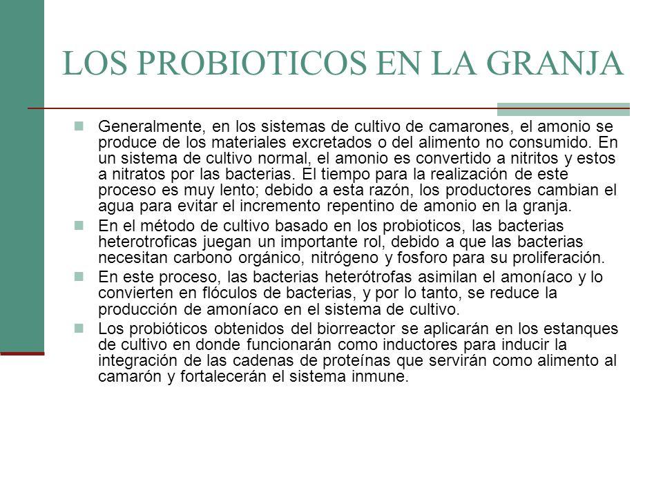 LOS PROBIOTICOS EN LA GRANJA Generalmente, en los sistemas de cultivo de camarones, el amonio se produce de los materiales excretados o del alimento n