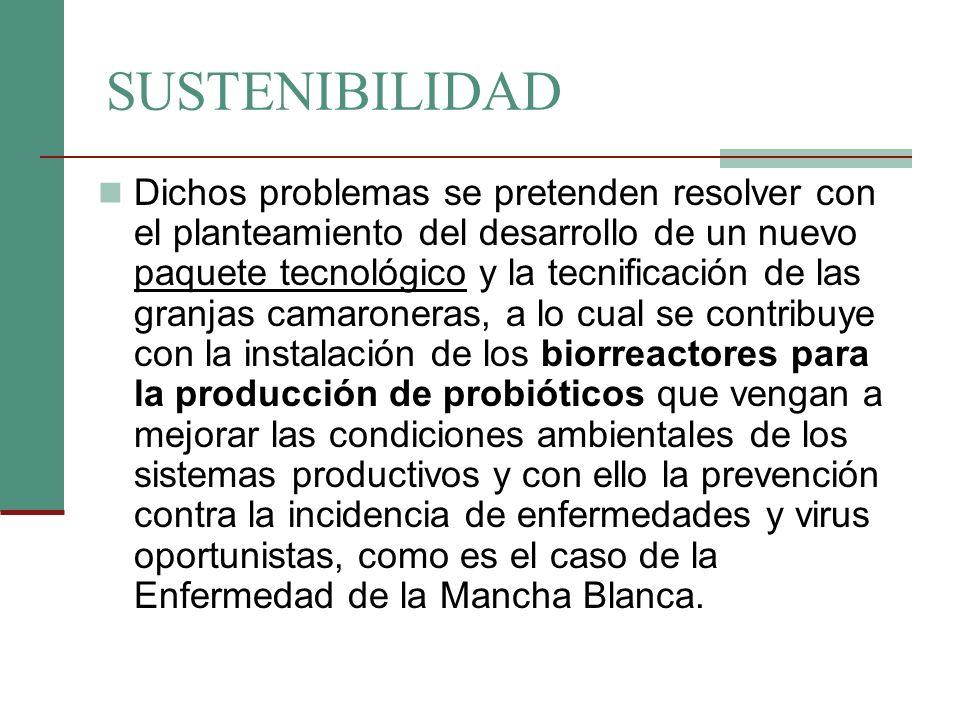 EL PROYECTO El proyecto contempla la aplicación de un paquete tecnológico basado en la biotecnología, para lo cual se requiere la instalación de BIORREACTORES (para la producción de probióticos) y la tecnificación productiva con el equipamiento de aireadores, con lo que se crearán las condiciones de bioseguridad necesarias para el desarrollo sustentable del camarón de cultivo.
