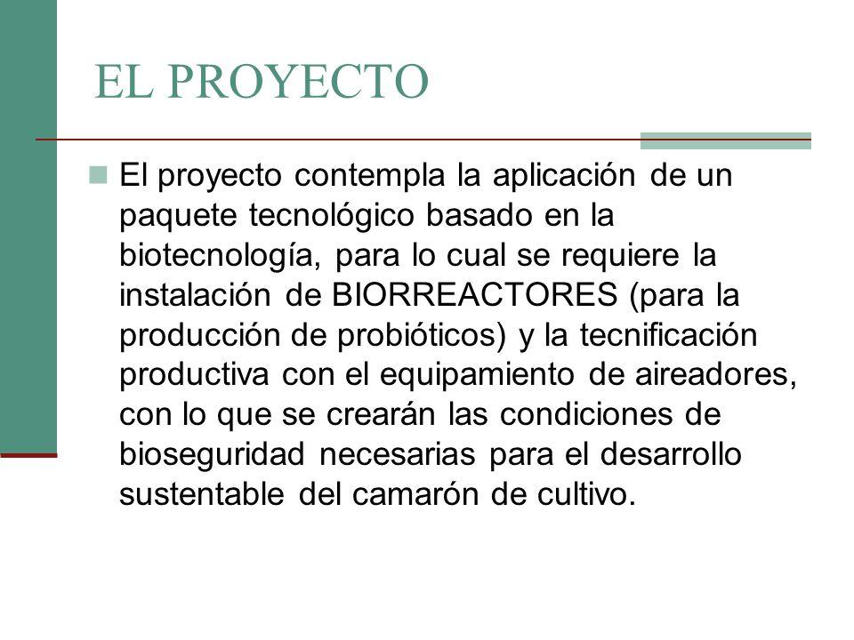 EL PROYECTO El proyecto contempla la aplicación de un paquete tecnológico basado en la biotecnología, para lo cual se requiere la instalación de BIORR