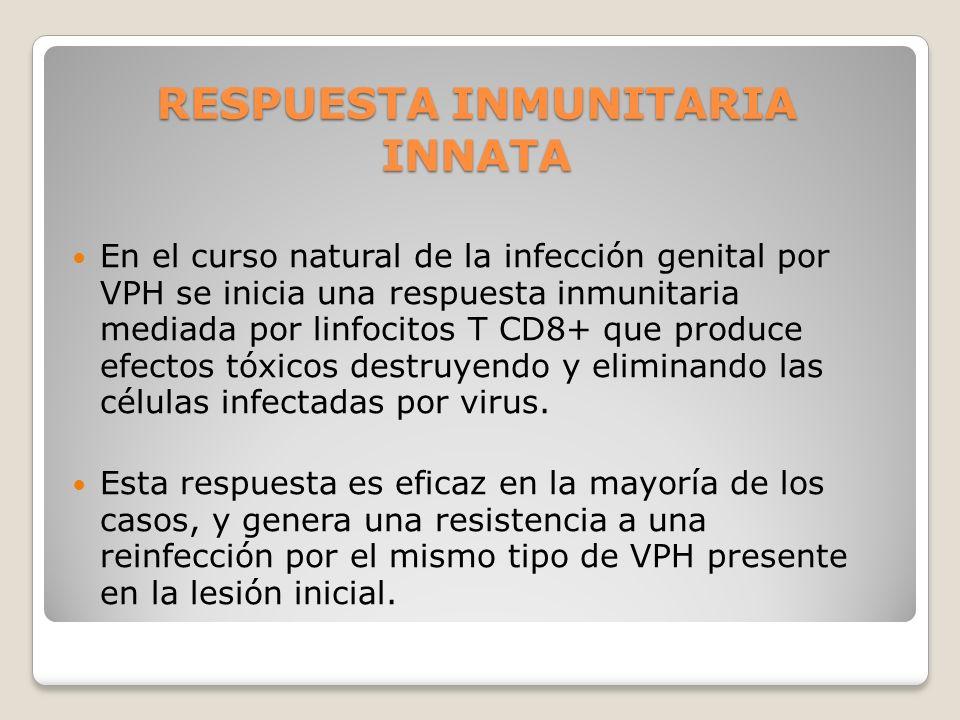 RESPUESTA INMUNITARIA INNATA En el curso natural de la infección genital por VPH se inicia una respuesta inmunitaria mediada por linfocitos T CD8+ que