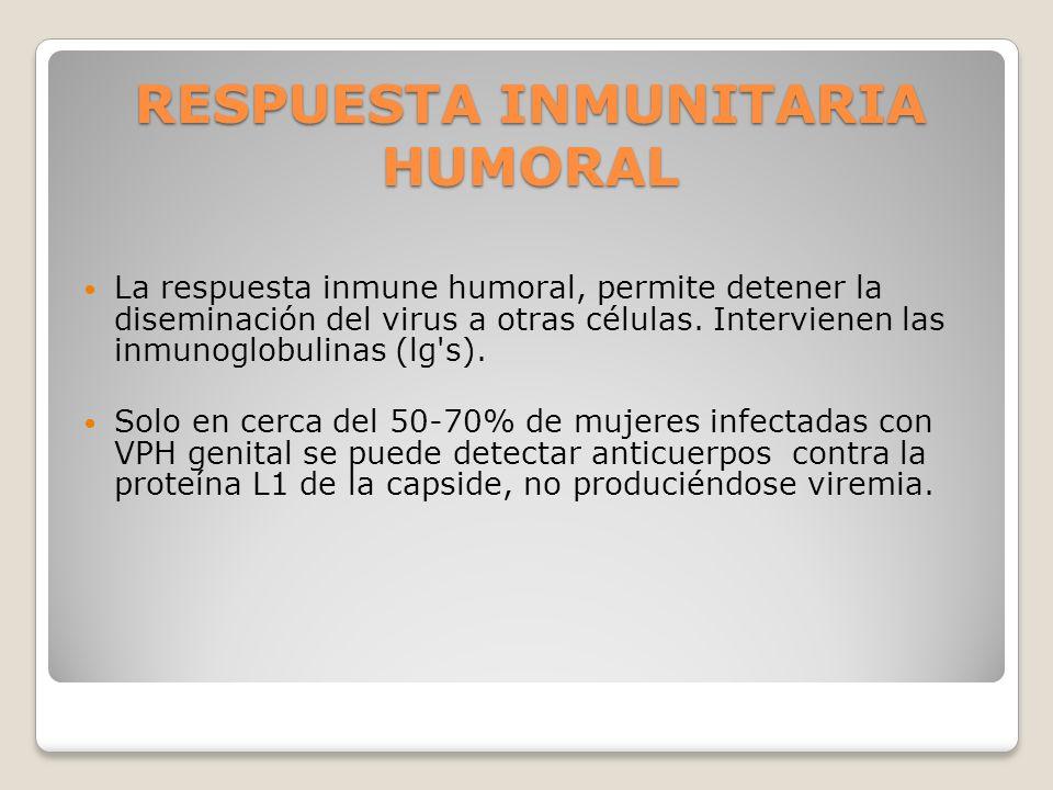 RESPUESTA INMUNITARIA HUMORAL La respuesta inmune humoral, permite detener la diseminación del virus a otras células. Intervienen las inmunoglobulinas