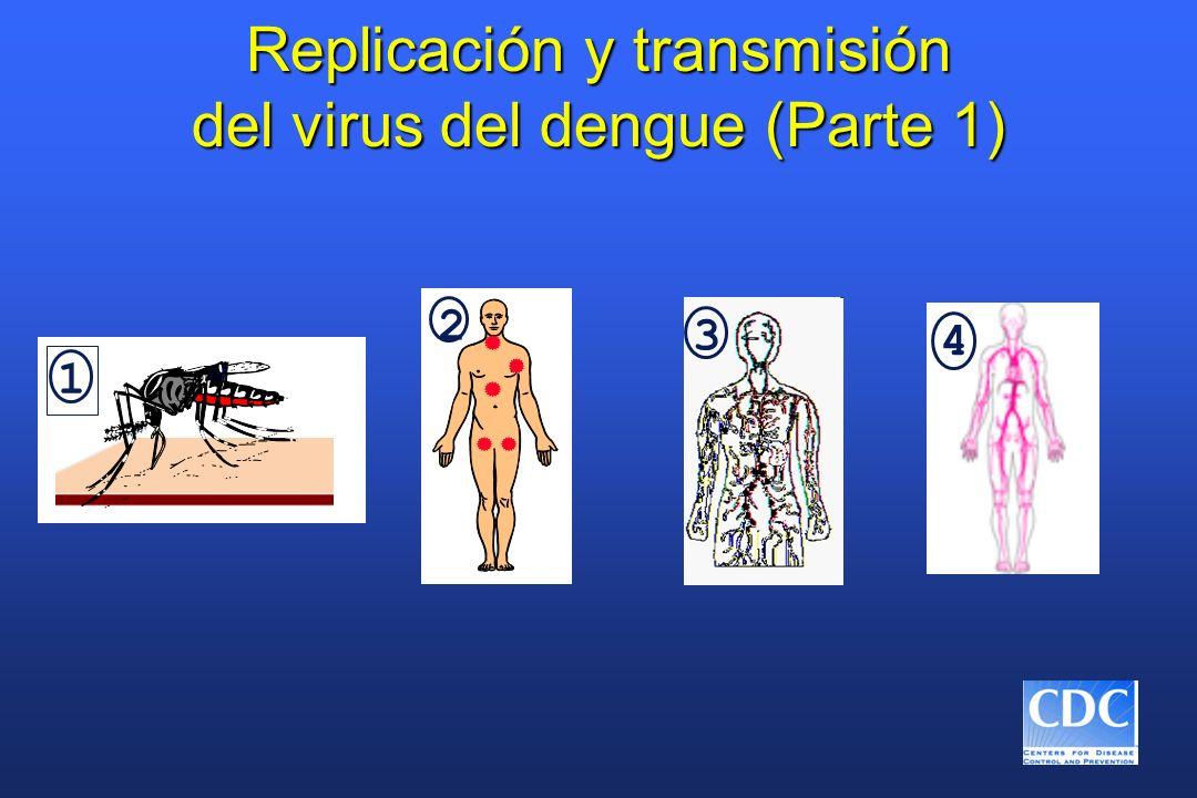 Replicación y transmisión del virus del dengue (Parte 1) 1 2 3 4