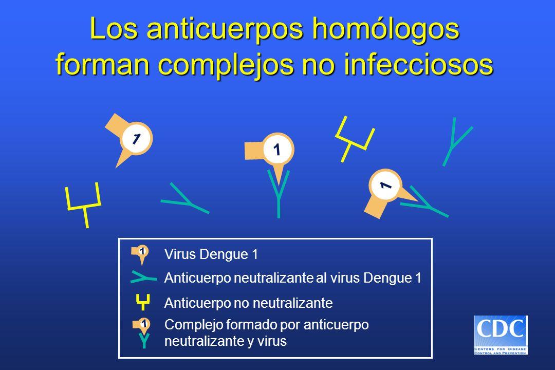 Anticuerpo neutralizante al virus Dengue 1 1 1 Virus Dengue 1 1 Anticuerpo no neutralizante 1 1 Complejo formado por anticuerpo neutralizante y virus